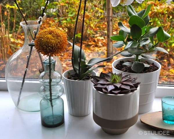 Urban Jungle Bloggers | Plants and Flowers | Planten en Bloemen | STIJLIDEE Interieuradvies en Styling