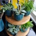 Urban Jungle Bloggers | Kitchen Greens | STIJLIDEE Interieuradvies en Styling