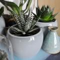 Urban Jungle Bloggers | Botanical Zoom | STIJLIDEE Interieuradvies en Styling