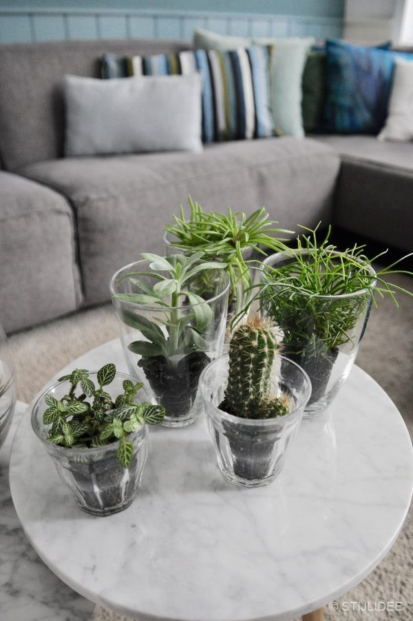 Urban Jungle Bloggers | Plants and Glass | Planten en Glas | STIJLIDEE Interieuradvies en Styling