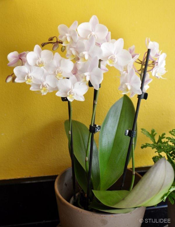 Urban Jungle Bloggers | 1 Orchidee Plant - 3 Stylings | Styling en Fotografie: STIJLIDEE Interieuradvies en Styling